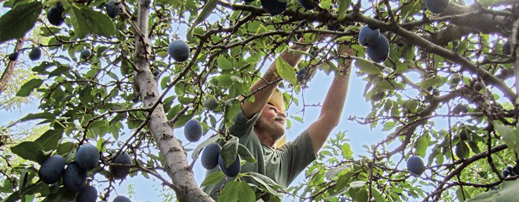 produce_organic